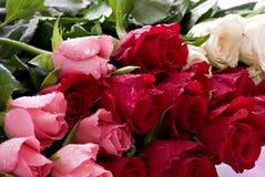 Grupo das rosas Imagem de Stock Royalty Free