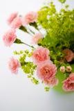 Grupo das rosas Imagens de Stock