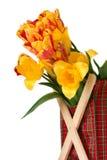 Grupo das tulipas Fotografia de Stock