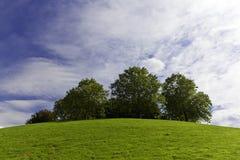 Grupo de árboles Fotos de archivo