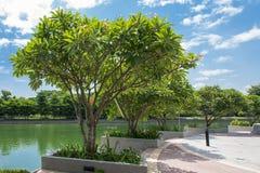 Grupo de árboles Fotografía de archivo