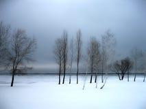 Grupo de árboles Invierno ucrania Fotos de archivo libres de regalías