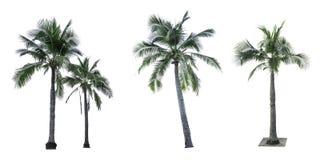Grupo de árvore de coco isolado no fundo branco usado anunciando a arquitetura decorativa Imagens de Stock