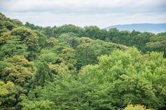 Grupo de árvore na montanha da floresta Imagens de Stock Royalty Free