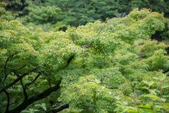 Grupo de árvore na montanha da floresta Fotos de Stock