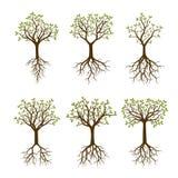 Grupo de árvores da cor com raizes Ilustração do vetor Imagens de Stock