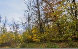 Grupo de árvores do outono contra o céu foto de stock royalty free