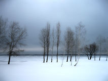 Grupo de árvores Inverno ucrânia Fotos de Stock Royalty Free