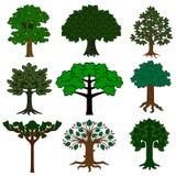 Grupo de árvores isoladas no fundo branco imagem de stock