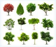 Grupo de árvores isoladas. Vetor ilustração royalty free