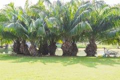 Grupo de árvores pálidas Foto de Stock Royalty Free