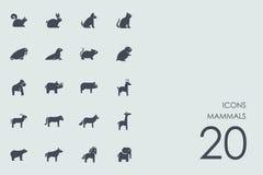 Grupo de ícones dos mamíferos ilustração stock
