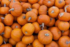 Grupo de abóboras alaranjadas pequenas Foto de Stock Royalty Free