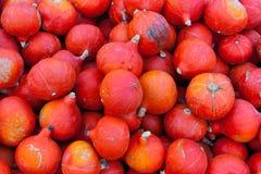 Grupo de abóboras vermelhas pequenas fotografia de stock