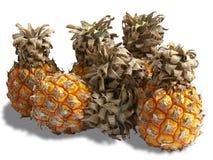 Grupo de abacaxis pequenos Fotografia de Stock Royalty Free
