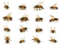 Grupo de abeja aislado en el fondo blanco Imágenes de archivo libres de regalías