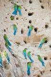 Grupo de Abeja-comedor Azul-atado Fotografía de archivo