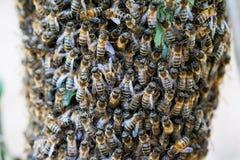 Grupo de abejas Foto de archivo