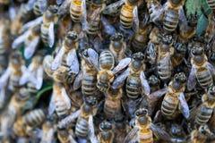 Grupo de abejas Fotos de archivo