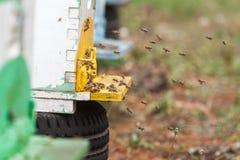 Grupo de abejas que vuelan de una colmena del vintage Fotos de archivo libres de regalías
