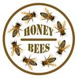 Grupo de abelha ou de abelha no círculo com texto imagem de stock royalty free