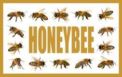 Grupo de abelha ou de abelha no fundo branco, abelhas do mel Imagem de Stock