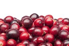 Grupo de airelas vermelhas frescas Imagens de Stock Royalty Free
