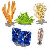 Grupo de algas marinhas coloridas e de criaturas subaquáticas isoladas no fundo branco Ilustração do vetor ilustração stock