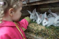 Grupo de alimentación de la pequeña muchacha de pelo rubio caucásica de conejos nacionales con la hierba fresca Imagen de archivo libre de regalías