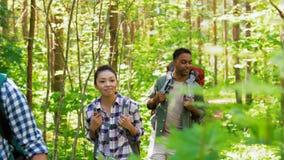 Grupo de amigos con las mochilas que caminan en bosque metrajes