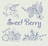 Grupo de amora-preta, morango, mirtilo, cereja ilustração royalty free