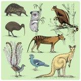 Grupo de animais australianos gravados, ilustração tirada mão do vetor Fotografia de Stock Royalty Free