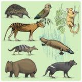 Grupo de animais australianos gravados, ilustração tirada mão no estilo do scratchboard do bloco xilográfico, desenho do vetor do Fotografia de Stock Royalty Free