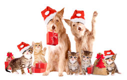 Grupo de animais com chapéus e presentes de Santa Foto de Stock Royalty Free