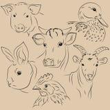 Grupo de animais de estimação das ilustrações Exploração agrícola Fotografia de Stock