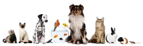 Grupo de animais de estimação que sentam-se na frente do fundo branco