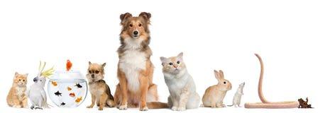 Grupo de animais de estimação que sentam-se na frente do fundo branco Imagens de Stock