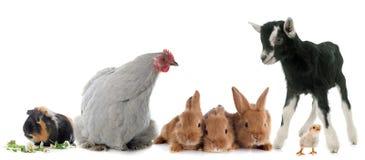 Grupo de animais de exploração agrícola imagens de stock