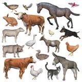 Grupo de animais de exploração agrícola - 3D rendem Foto de Stock