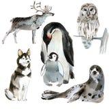 Grupo de animais do norte Ilustração da aquarela no fundo branco Imagens de Stock