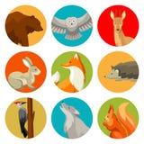 Grupo de animais e de pássaros da floresta da floresta Ilustração estilizado Fotografia de Stock