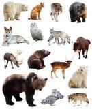 Grupo de animais europeus Isolado sobre o branco Foto de Stock Royalty Free