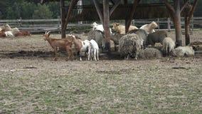 Grupo de animais de exploração agrícola filme