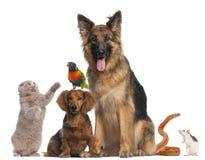 Grupo de animais na frente do fundo branco Imagem de Stock Royalty Free
