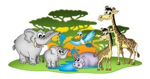 Grupo de animales africanos Imagen de archivo libre de regalías