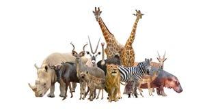 Grupo de animales de África Imágenes de archivo libres de regalías