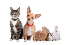 Grupo de animales domésticos Foto de archivo