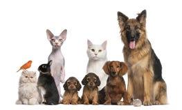 Grupo de animales domésticos fotografía de archivo