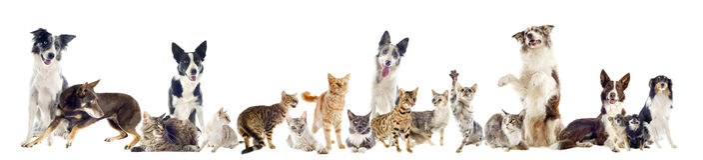 Grupo de animales domésticos Fotografía de archivo libre de regalías