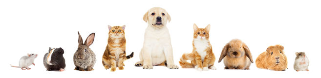 Grupo de animales domésticos foto de archivo libre de regalías